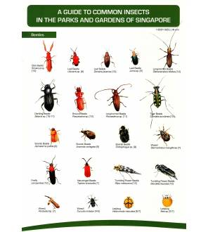 A Guide To Common Insects In The Parks And Gardens Of Singapore