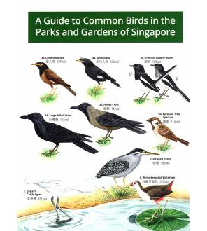 A Guide To Common Birds In The Parks And Gardens Of Singapore